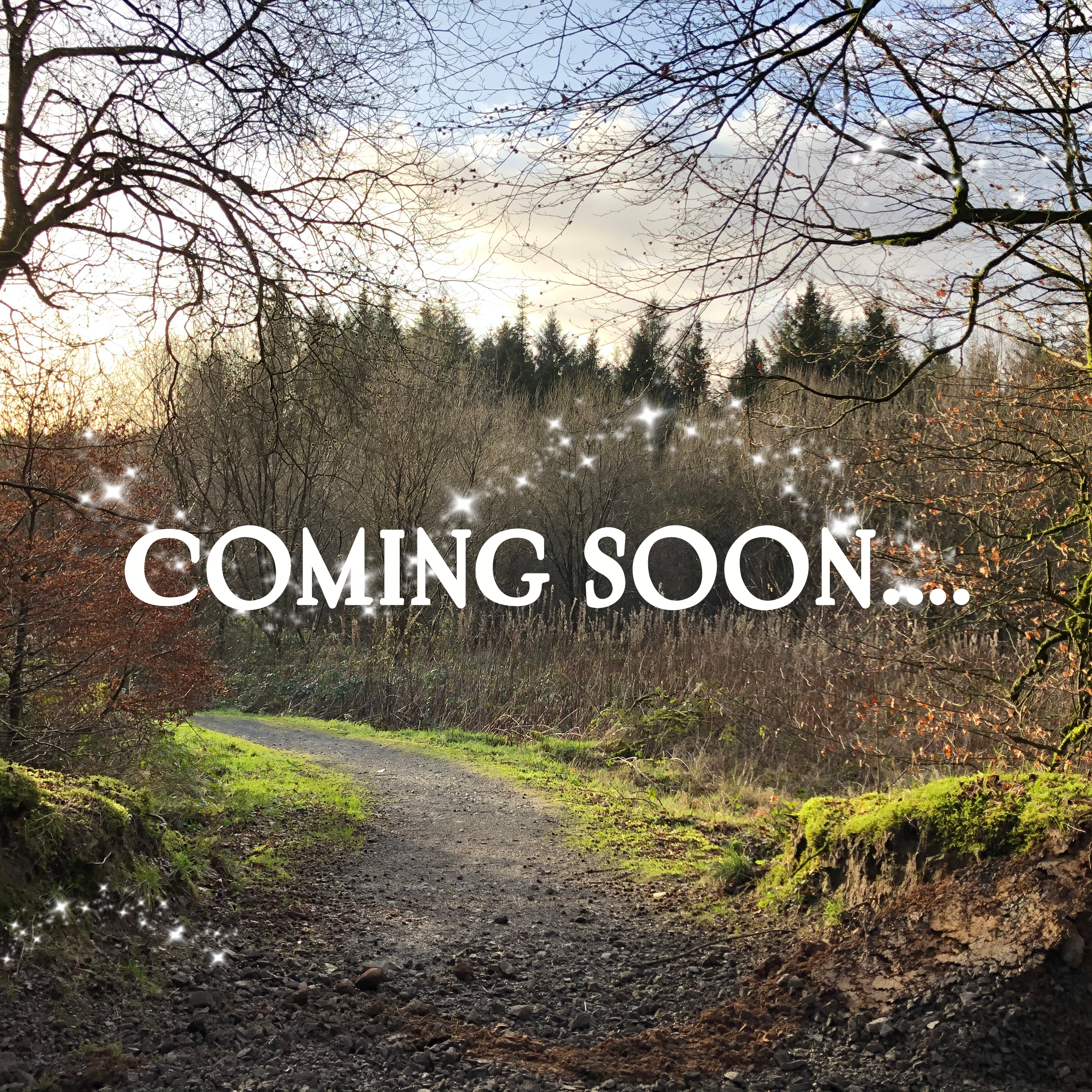 Magic Forest Trail, Pomeroy Forest, Interpretive Trail Designers, coming soon